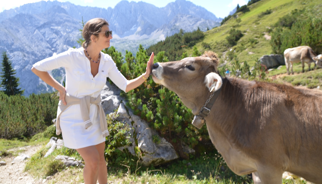 Of Cows and Corporate Cultures